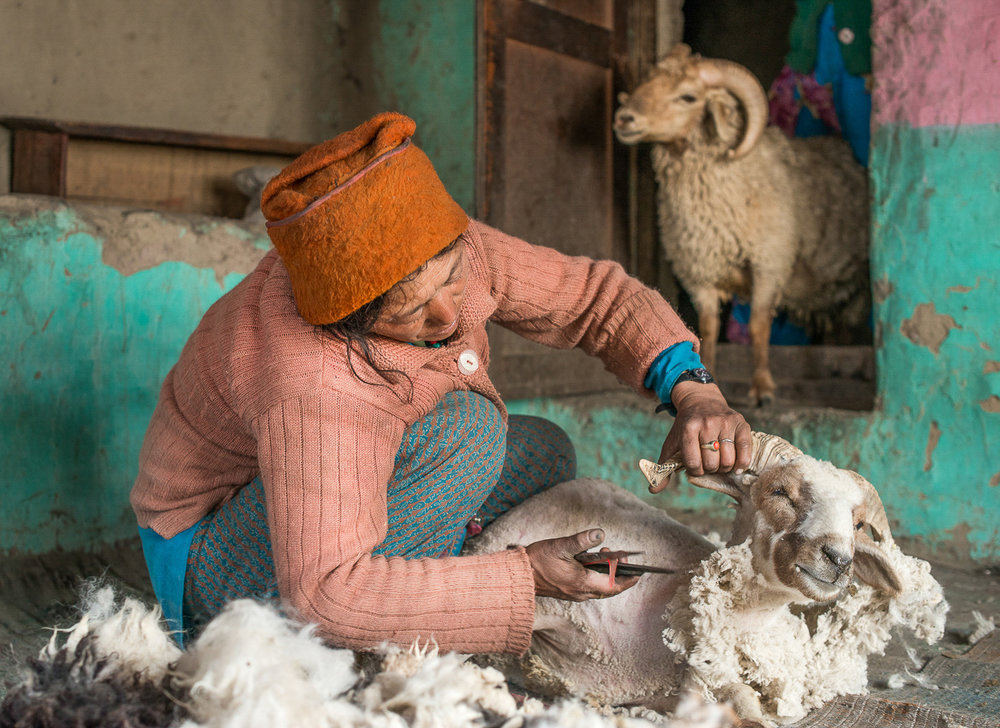 Soman Chasdon shears wool off a sheep using a manual shear, in the village of Kumik in Zanskar, Kashmir. While shearing, Chasdon sings to her sheep to keep them calm. A severe water shortage in 2003 due to climate change forced villagers including Chasdon to sell most of the livestock.