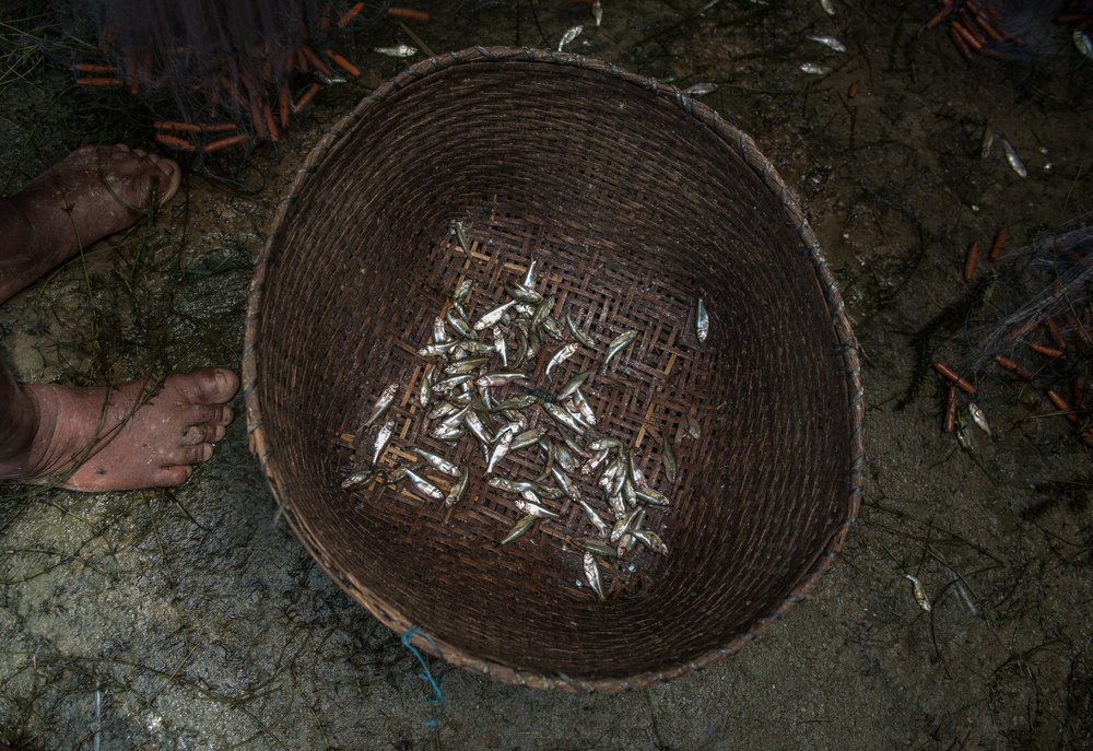 Mukha nga (non-native fish) that were fished from Loktak lake sit in a basket at the Laishram family home in Thanga. After the construction of Itahi Dam when the native fish populations in the Loktak Lake began dwindling, the state fisheries department introduced numerous non-native fish species to the lake.