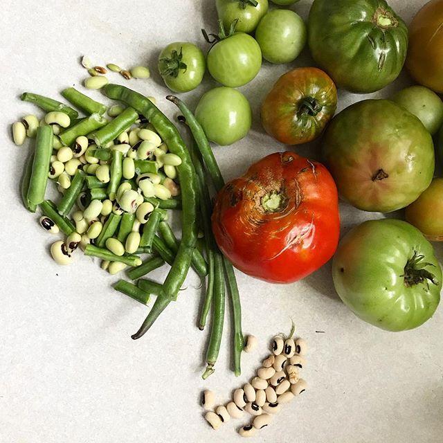 The last  harvest before the freeze. #vegetablegarden #fallishere #homebodylife