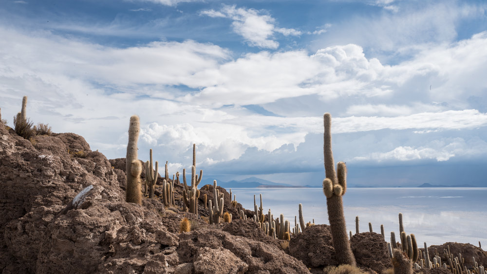 An island in the middle of the salt flat, inhabited by cactus, pretty cool!