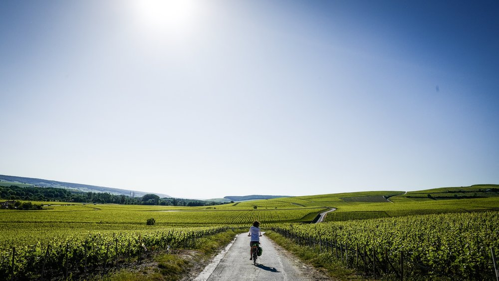 Sadly, like most food production nowadays, champagne is also big monoculture. Why does champagne have to taste so good?