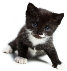 Good nutrition is vital for youngsters to grow up healthy -ask us what we recommend for your kitten!