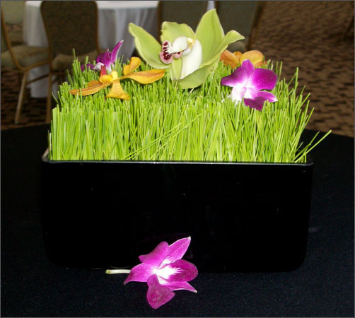 bar_grass_orchid.JPG
