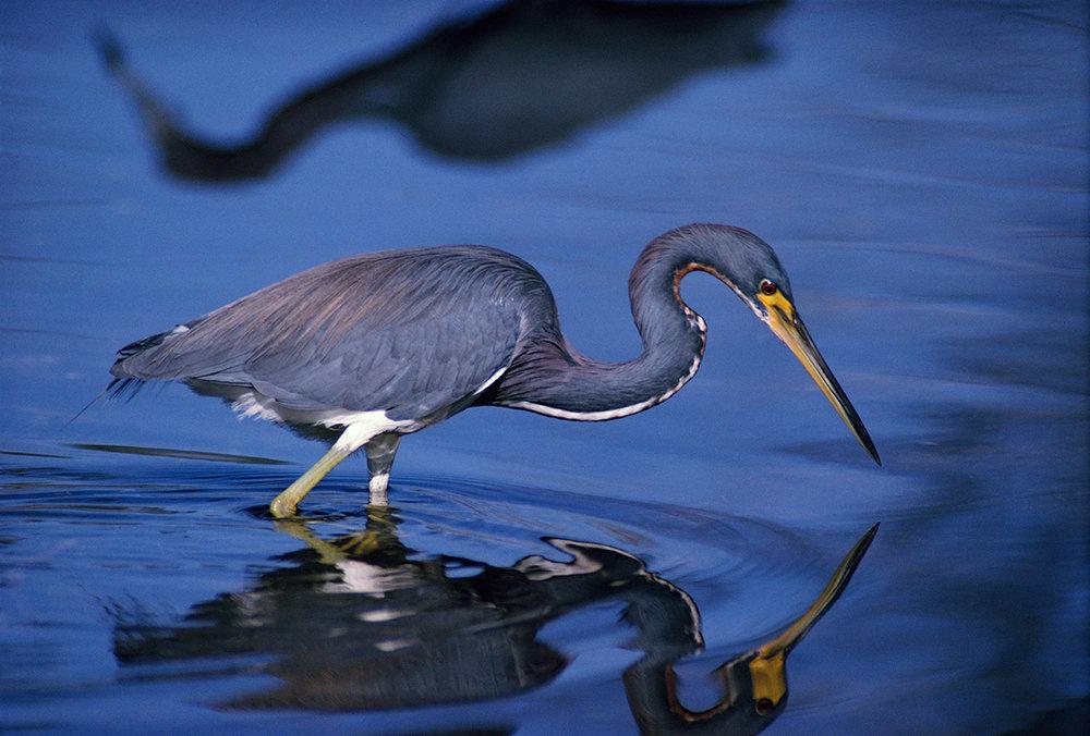 bird01CCC.jpg
