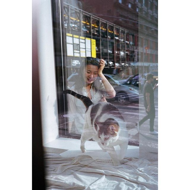 """I imagine @animalhaven's """"surprise New Yorkers with cute #cats in the window"""" strategy is very effective"""