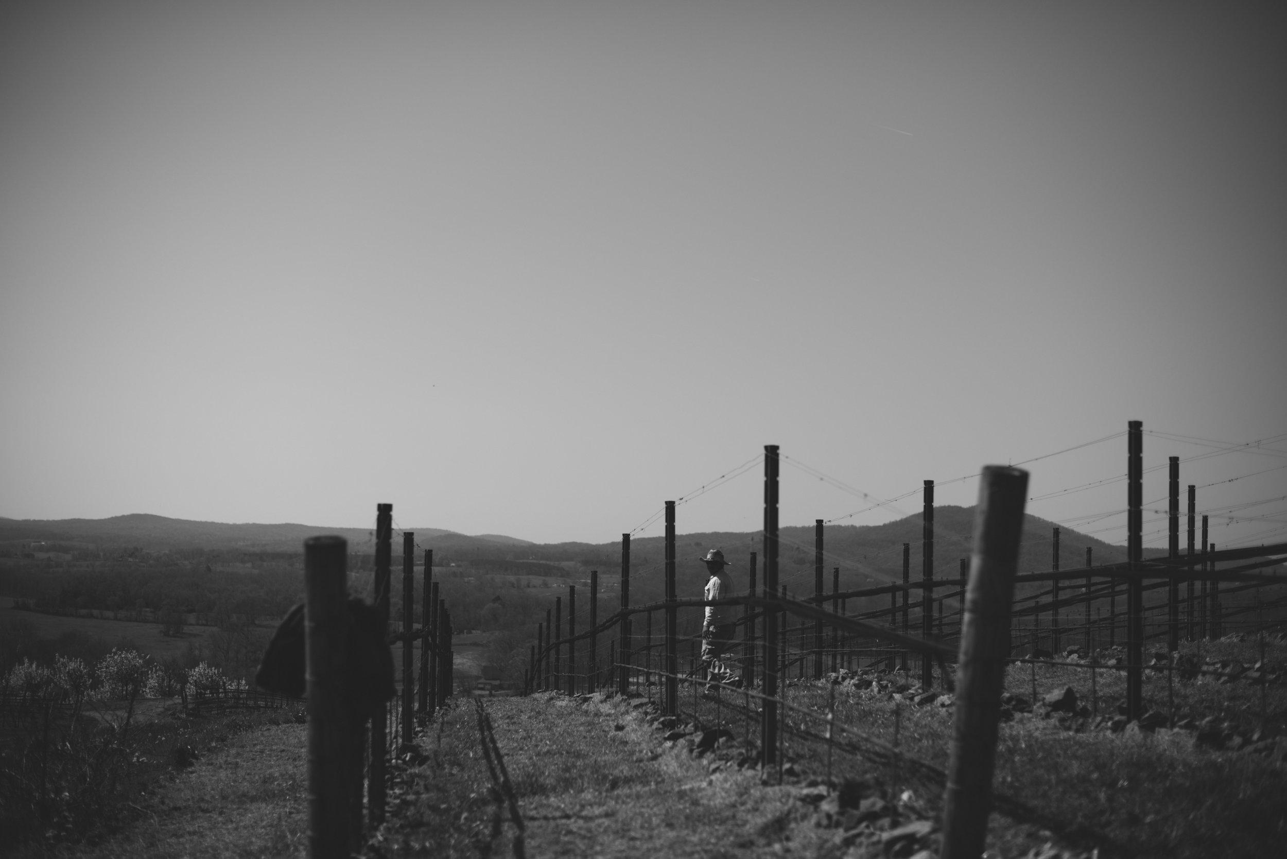 2013 Vintage Film RdV Vineyards
