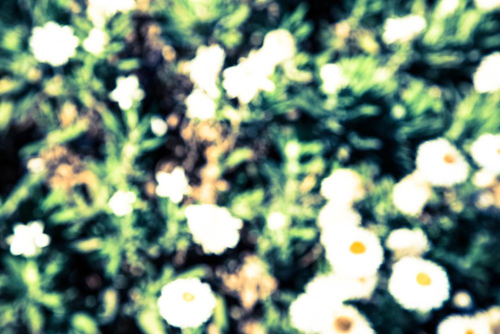 thisisBrunswick_39.jpg