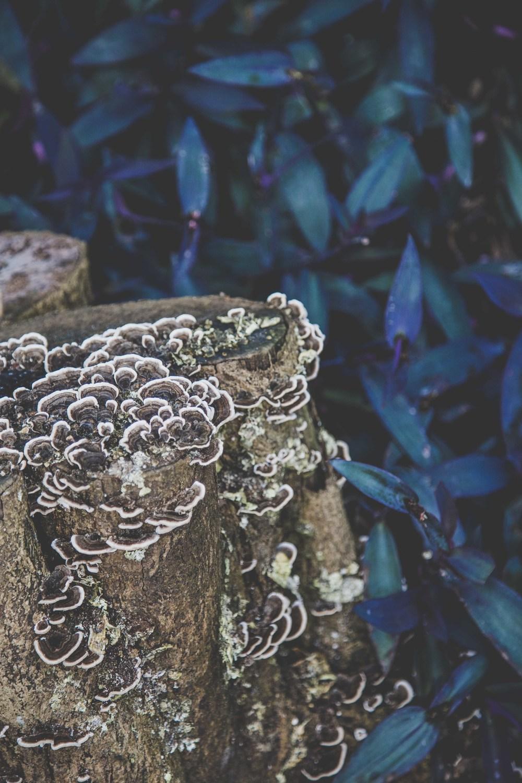 Wendy Whiteley Garden - PhotoKateLongley-0G4A26642016-7.jpg