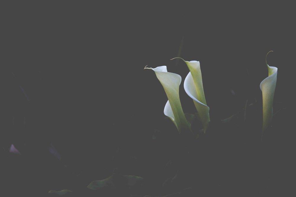 Bimbi wye- photo KateLongley-0G4A8887-2016-3.jpg