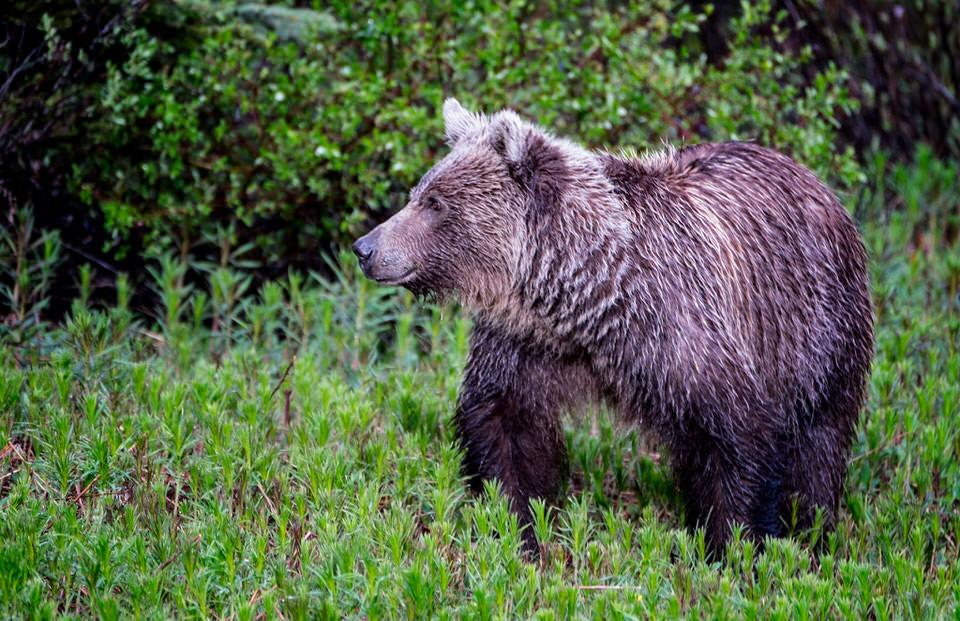 Honey-Bear-2.jpg