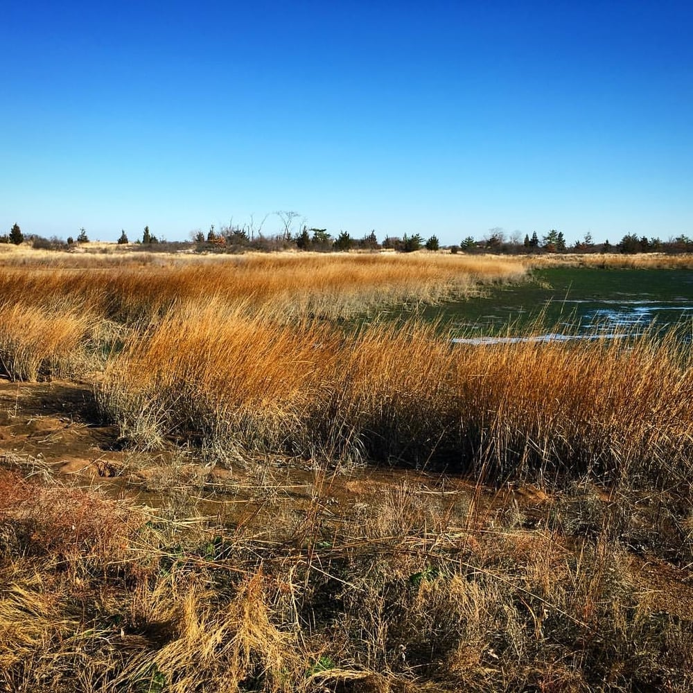Natural wetland at Sunken Meadow State Park, Kings Park, (Long Island) N.Y. Credit: Erica Cirino, January 2016