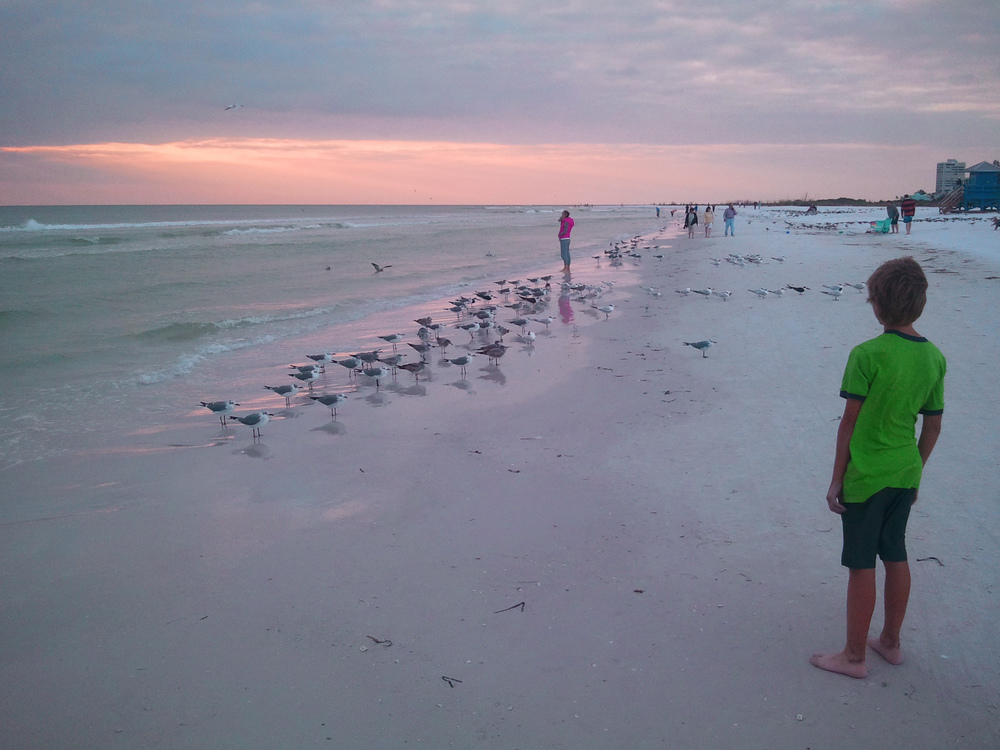 A young boy respectfully watching shorebirds from a distance on a beach in Florida. Credit: JSarasota (Wikimedia Commons)