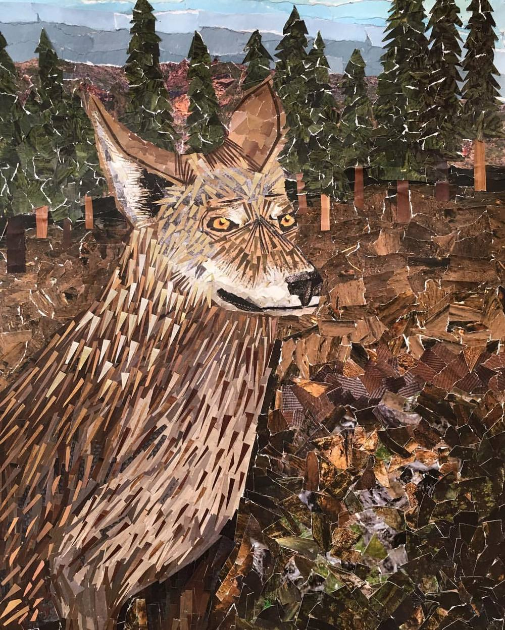 A coyote visits. Erica Cirino, July 2016. (Cut and torn paper collage)
