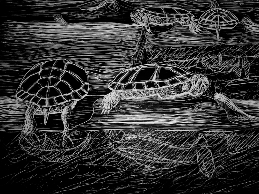 Leisurely turtles
