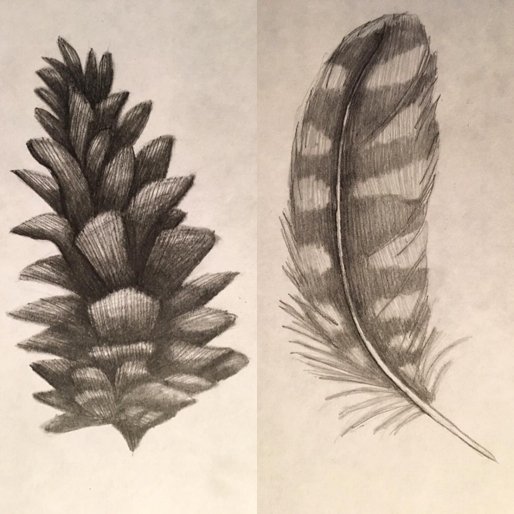 Pinecone, & Eastern Screech Owl Feather