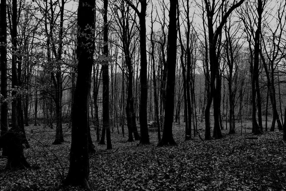©Erica Cirino. Danish forest, BW. March, 2017.