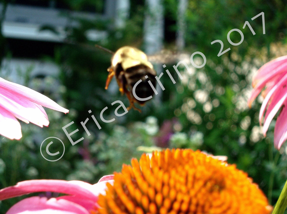 """""""Honeybee Landing"""" (Cold Spring Harbor, NY). 8x10in. color photo print. $150.00"""