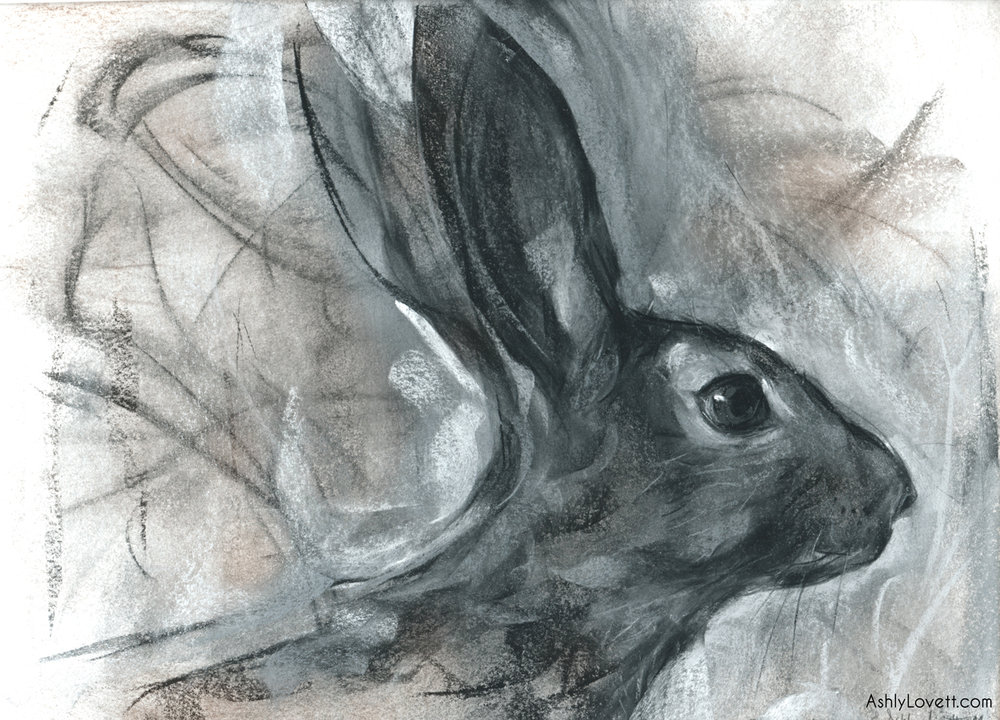 AshlyLovett-rabbit.jpg