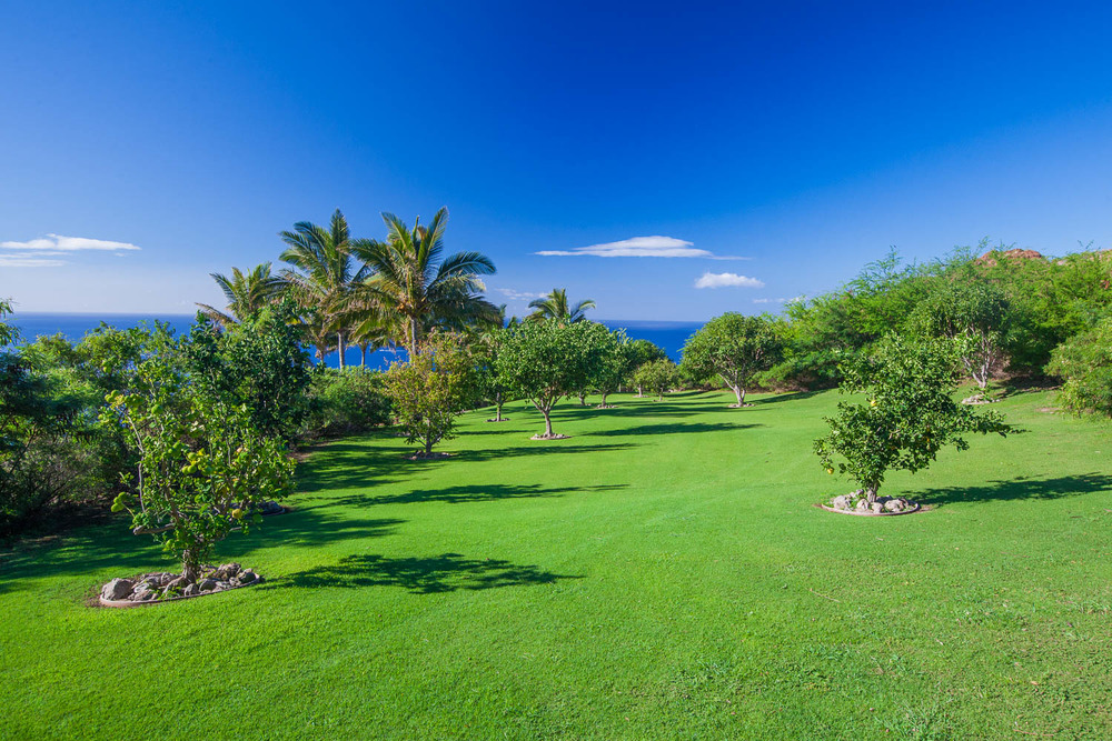 chris-curtis-landscape-maintenance-oceanfront-orchard-maui.jpg