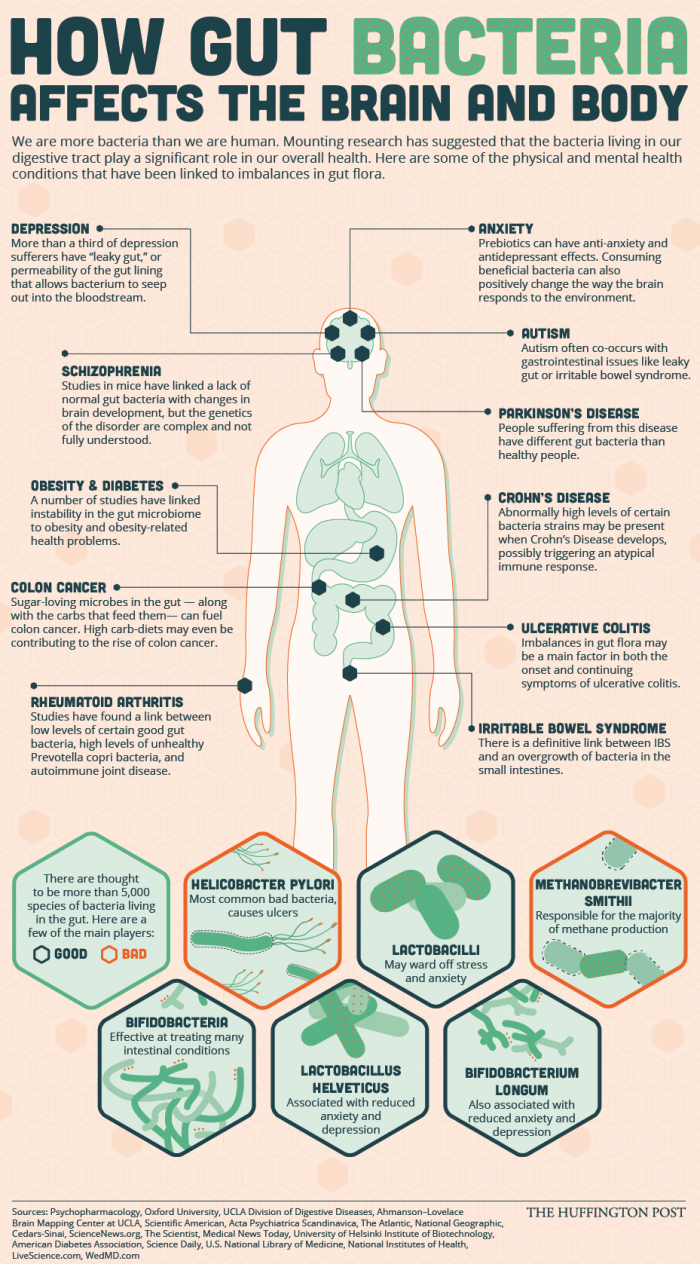 The impact of gut bacteria and health.