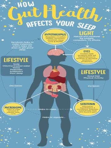 Gut health affects sleep.png