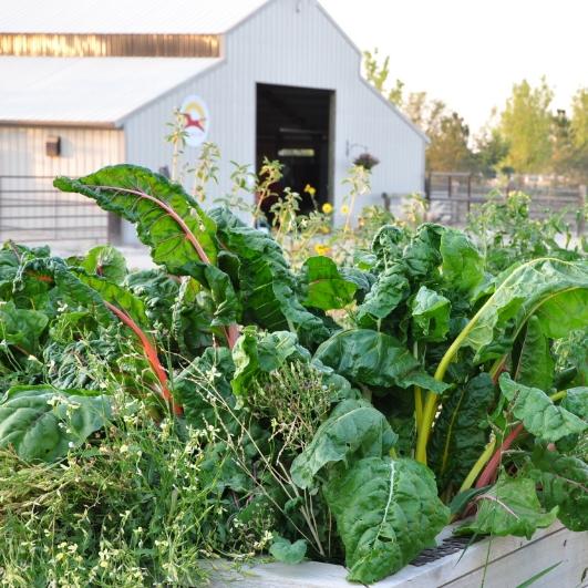 garden (3).JPG