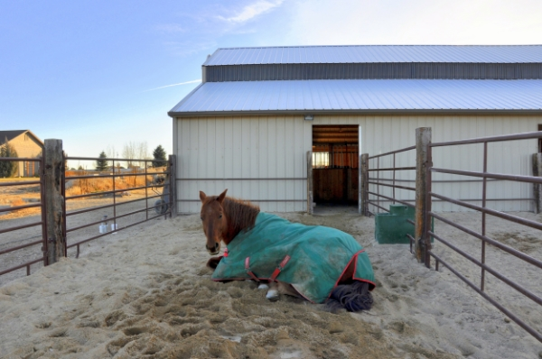 This is a confinement area that has sand for footing, which is comfy for horses to lie in. Care should be taken to get the right depth for joint health, and the right type, one that drains well and doesn't get too dusty.