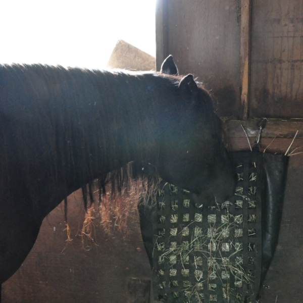 Hay nets can work well for slow feeding also, making mealtimes last longer, which is good for digestion and good for alleviating boredom in confinement areas.