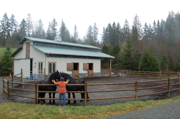 Confinement areas can be cost-effective group areas like this one for horses that get along well.