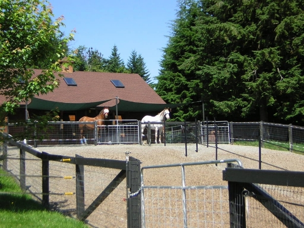 Many people use hog fuel or wood chips for larger areas as it is more cost effective than gravel. These paddocks are attached to smaller gravel ones so there are options for the owners in the amount of turnout the horses get.
