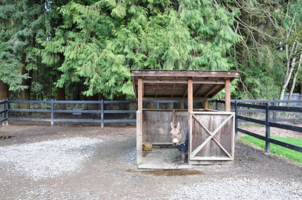 Scaling shelter sizes to the size of your animals can be a money saver; some small structures can be put on skids so they are portable and can be used in a rotational grazing program.