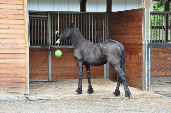 "Adding toys and interesting treats and feeders helps ""busy"" horses from becoming bored and developing vices."