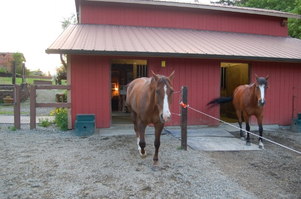 2 - same barn, with mud managment, paddock footing, gutters & downspouts.JPG