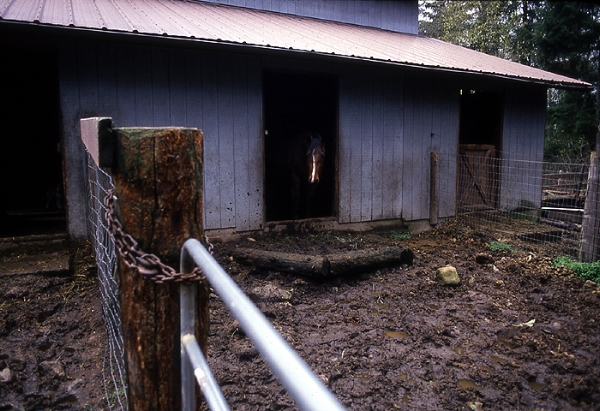 3 - barn & mud before.jpg