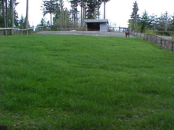 5 - same pasture after rennovation & management.jpg