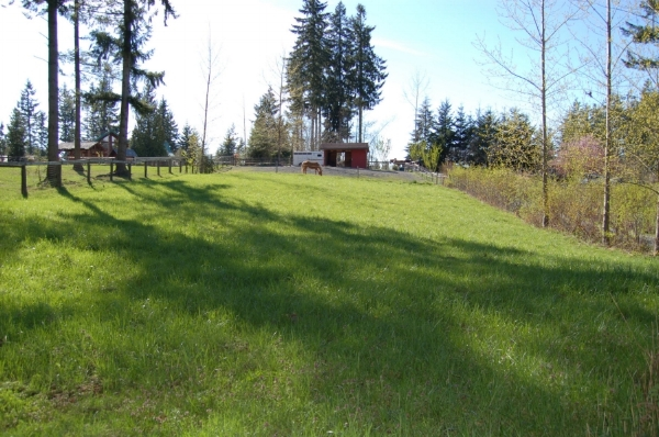 5 - same pasture, hedgerows.JPG