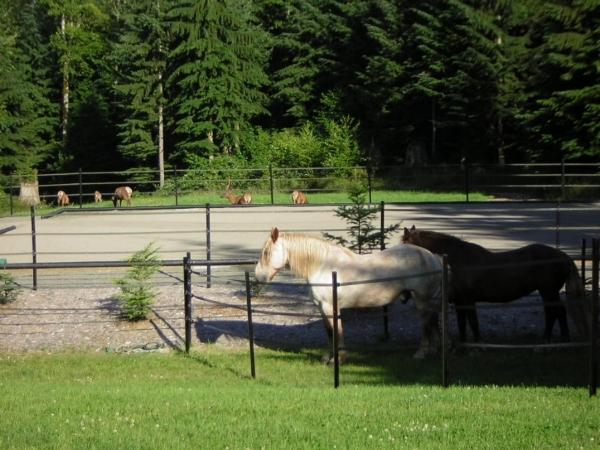 Draft Horse Loggers.jpg