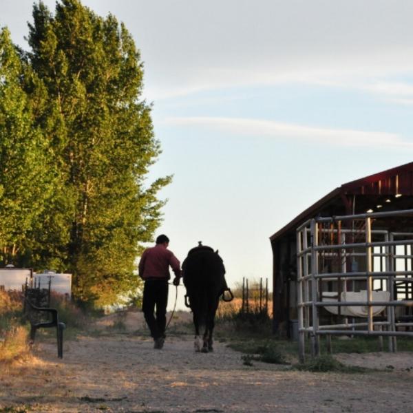 front of barn M & Midge (121).JPG