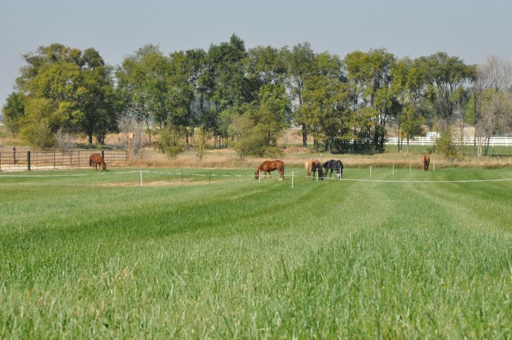 rotational grazing Nampa.JPG