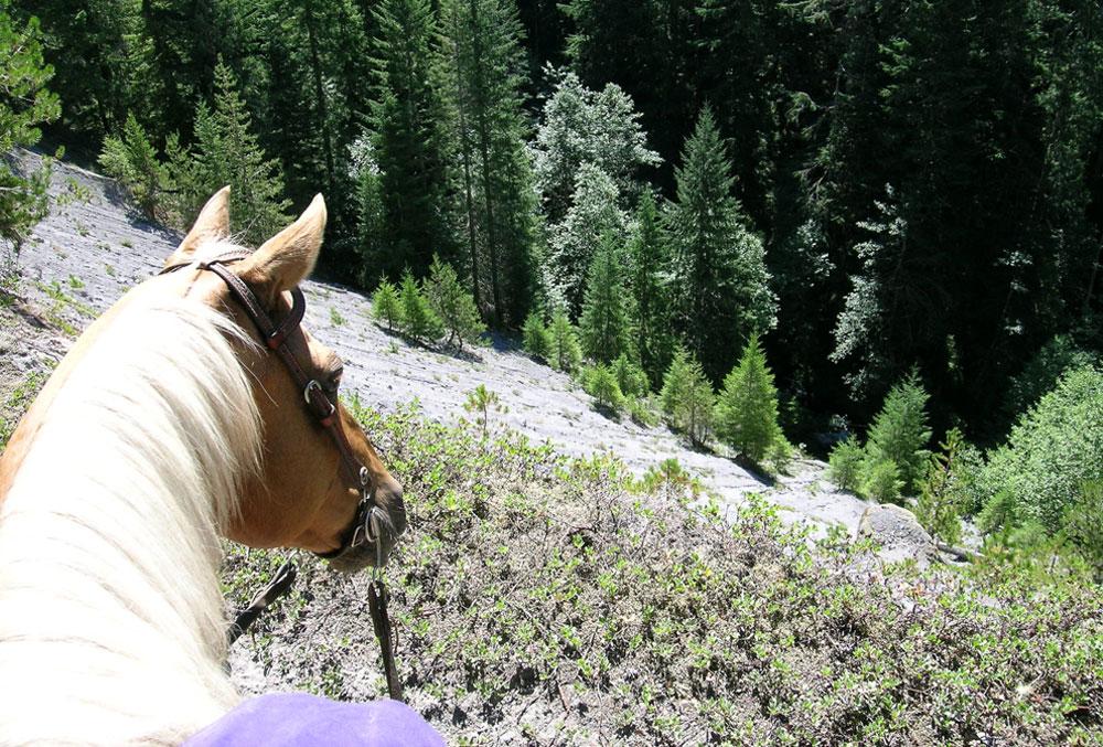 Annie-on-the-trail.jpg