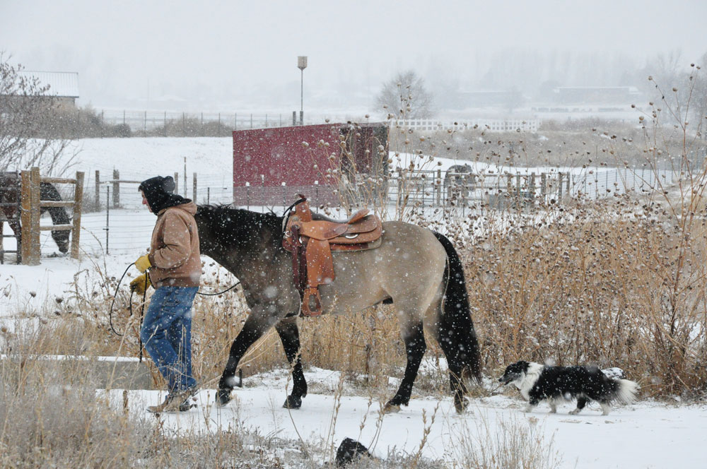 snow-storm-horses-for-clean-water-2.jpg