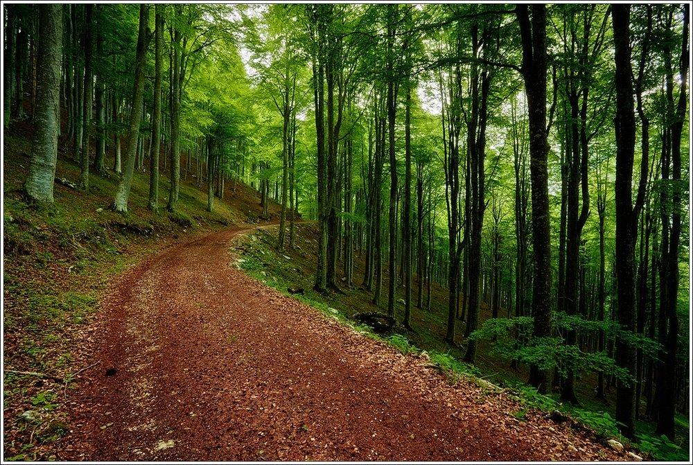 Italy woods path.jpg