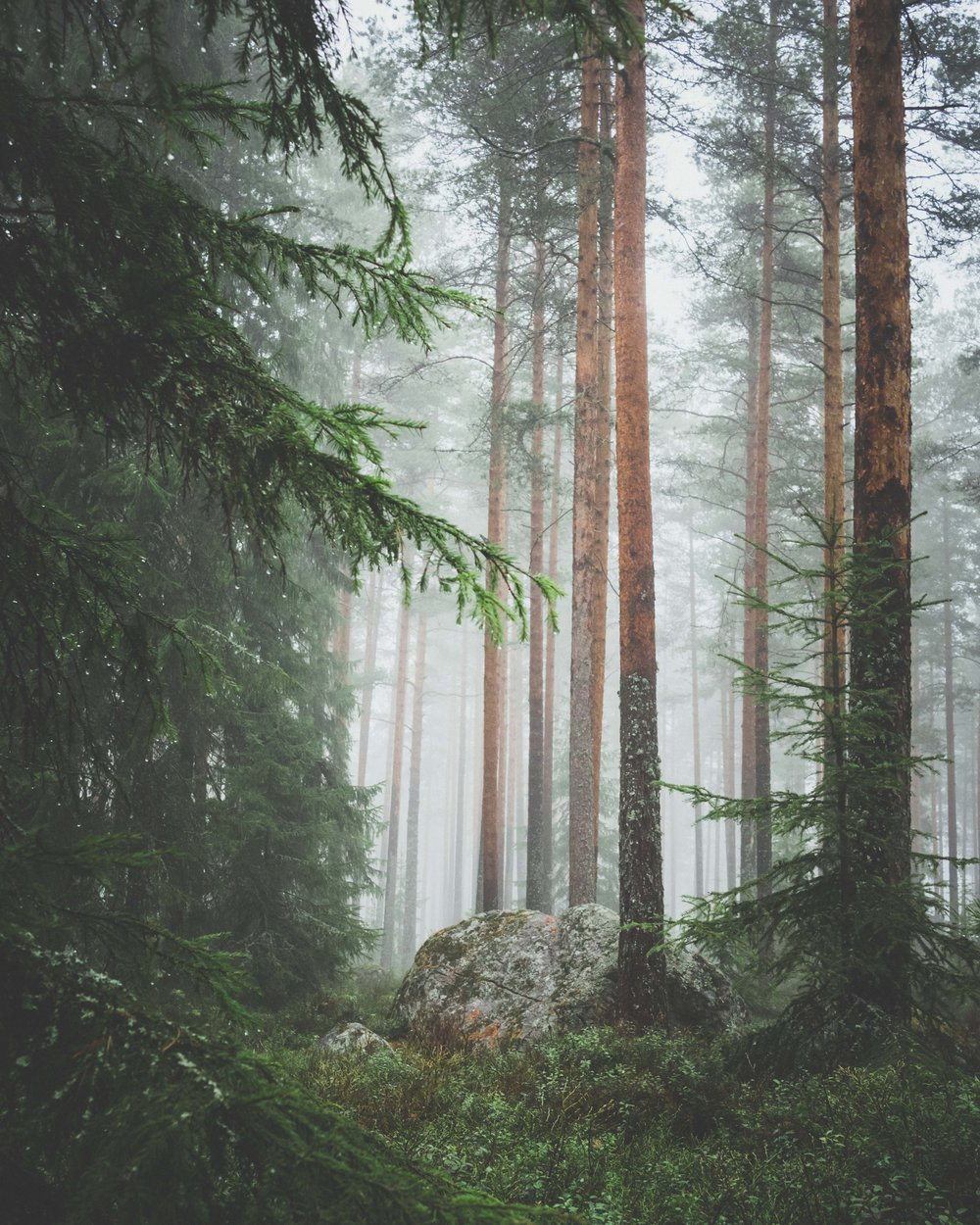 Trees in mist jachan-devol-unsplash.jpg
