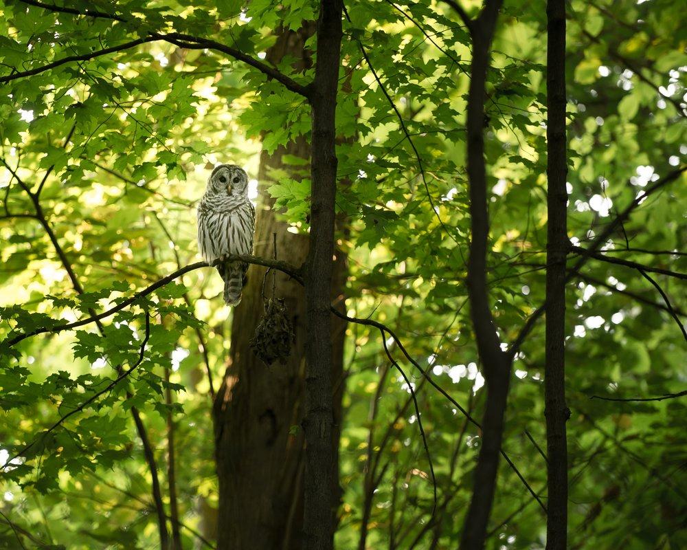 Tree + Owl * tina-rataj-berard-unsplash.jpg