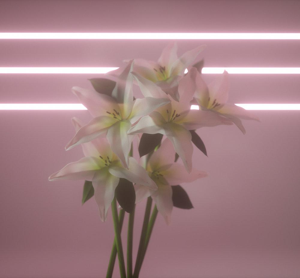 liliespink (0-00-00-00).jpg