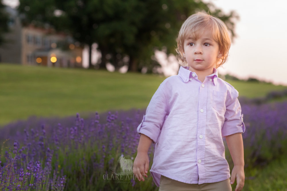 Portrait of a little boy in the Lavender Field at Springfield Manor, located in Maryland.  Taken by Fine Art Portrait Photographer Clare Ahalt Photography.