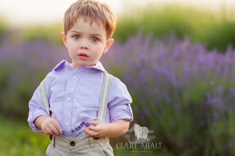 Photographic Portrait of a little boy in a lavender field at Springfield Manor in Maryland.  Taken by fine art portrait photographer Clare Ahalt.