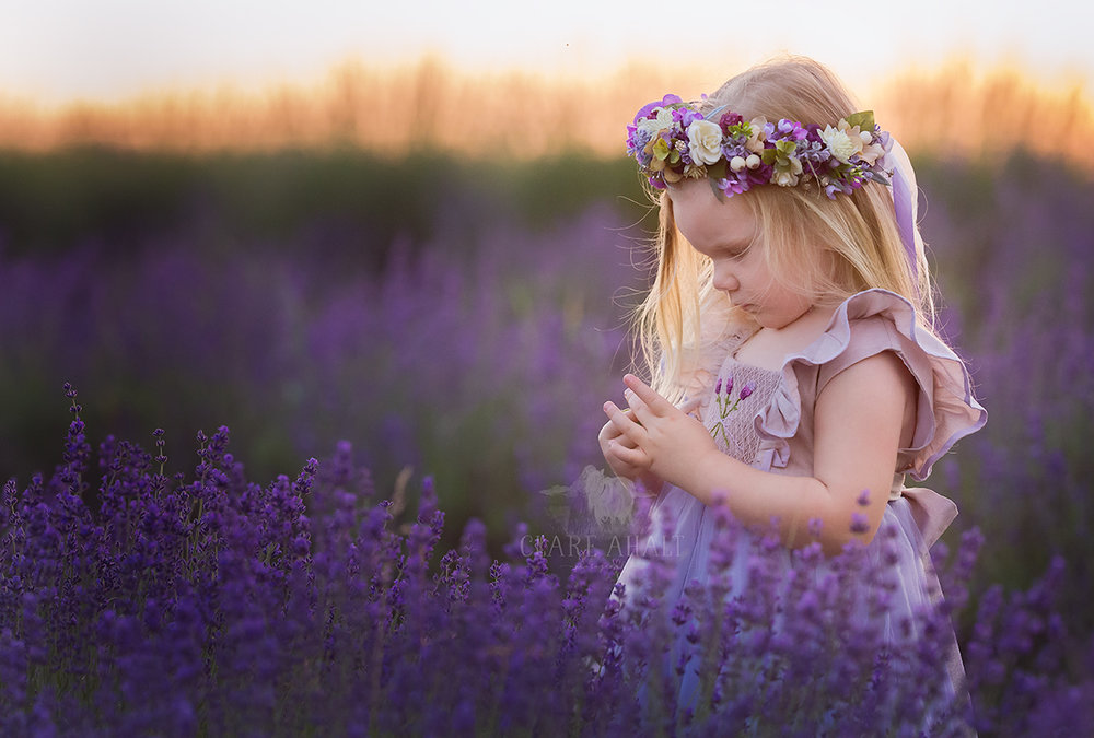 Photograph of a little girl in a field of purple lavender at Springfield Manor.  Photographed by Clare Ahalt Photography, a fine art photographer located in central Maryland, specializing in fine art child portraiture and high school senior portraits.