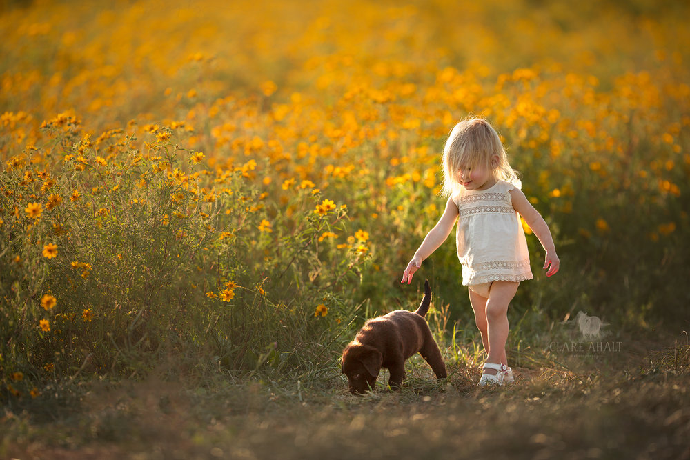 Portrait of a little girl in a field of yellow flowers and a chocolate lab puppy photographed in Northern Virginia at a workshop held by Elena Shumilova Photography by Clare Ahalt Photography, a fine art photographer specializing in child portraiture located in Mid-Maryland, serving Maryland, the greater washington DC and Baltimore areas and Northern Virginia.