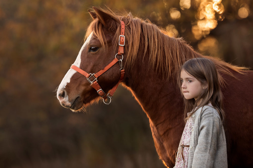 Photograph of a girl and pony taken on location on a farm in Maryland by Clare Ahalt Photography, a fine art portrait photographer located in Maryland, serving clients in Maryland, Northern Virginia and Washington DC